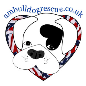 Am Bull Dog Rescue England